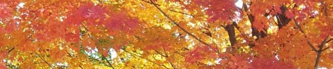 Fall-Banner-at-Top (1)